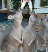 roos-and-bottles